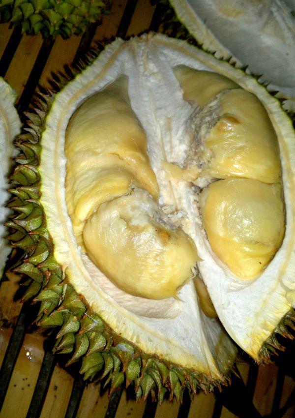 Durian-Palopo.jpg