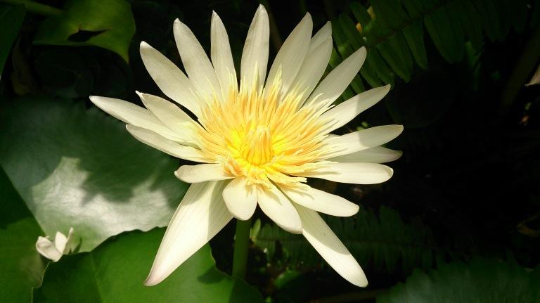 Bunga Mekar Merekah