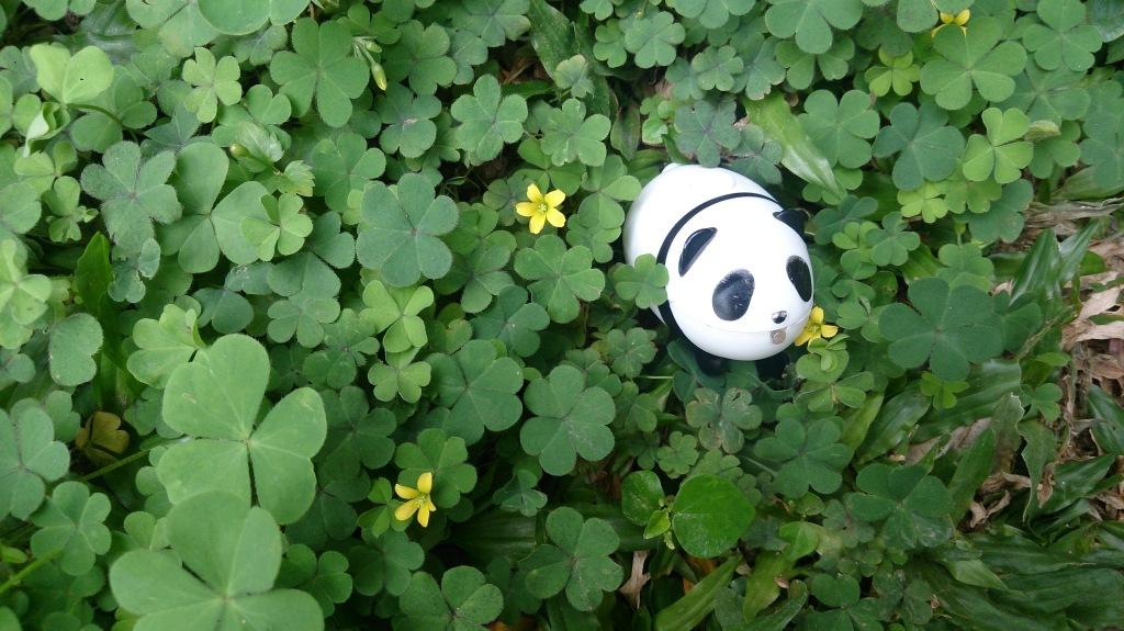 panda malas