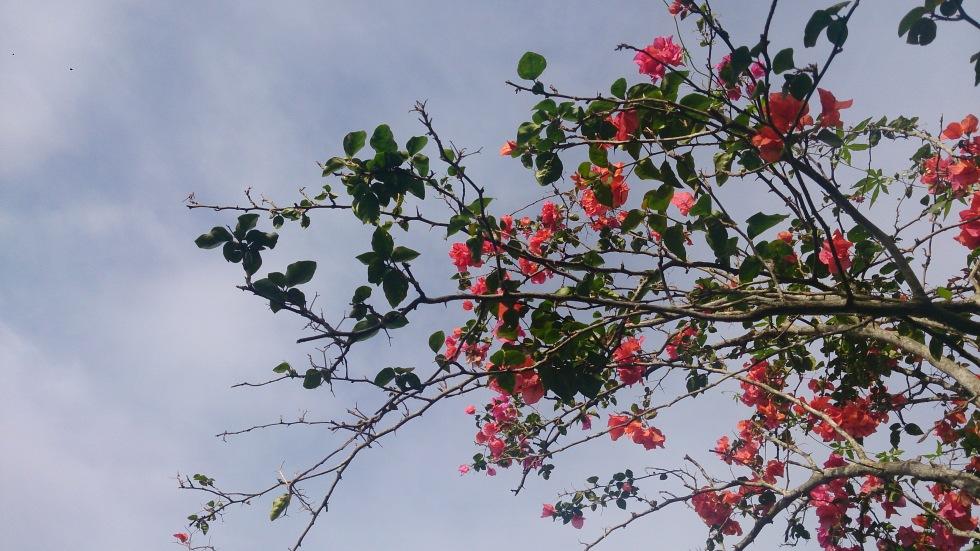 Bunga Langit Mei